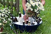 Bierflaschen und Krügen in Schüssel mit Eiswürfeln, Frau stellt  Topf mit Margerite als Deko dazu