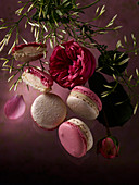 Macarons with roses and jasmine