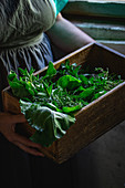 Vintage box full of greens
