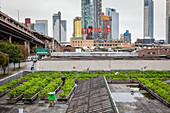 Dachfarm auf einem ehemaligen Industriegebäude in Queens, NY