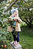 Barefoot girl standing on ladder next to apple tree in garden