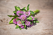 Bouquet with clover and red clover (Trifolium pratense)