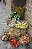 Organic vegetables and apples in baskets on a farm