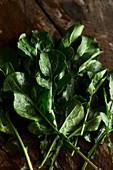 Freshly picked arugula leaves