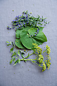 Hyssop, leaf pepper and lovage