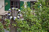 Blütenkranz mit Hortensienblüten, Maiglöckchen, Vergißmeinnicht und Moos
