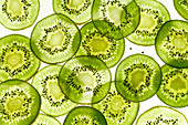 Backlit kiwi fruit slices on white background. Top view texture