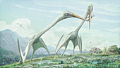 Arambourgiania pterosaurs, illustration