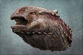 Henodus aquatic reptile head, illustration