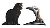 Hornby azhdarchoid pterosaur and cat, illustration