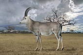 Blue antelope, illustration