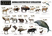 Animals destroyed by civilization, illustrations