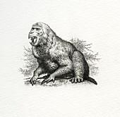Aegyptopithecus prehistoric primate, illustration