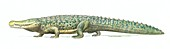 Deinosuchus prehistoric crocodilian, illustration