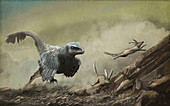 Velociraptor chasing prey, illustration