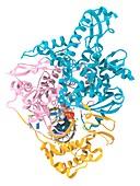 Potential coronavirus drug and target, illustration