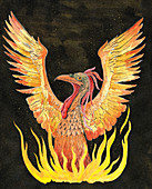 Phoenix rising from flames, illustration