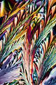 Beta-alanine and ascorbic acid, polarised light micrograph
