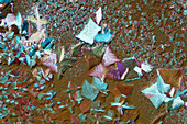 Crystals of a mixture of salts, polarised light micrograph