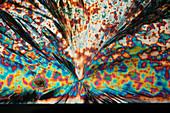 Magnesium acetate, polarised light micrograph