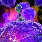 Bacteriophage infecting bacterium, illustration