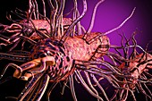 Bacteria, illustration