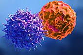 T cell attacking cancer cell, illustration