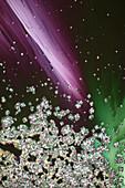 Zinc sulphate and sugar, polarised light micrograph