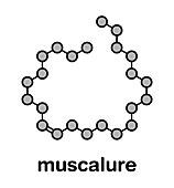Muscalure house fly sex pheromone molecule, illustration