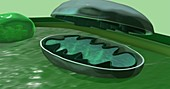 Mitochondrion in a plant cell, 3D illustration