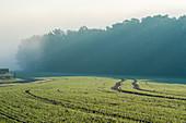 Field on a foggy morning