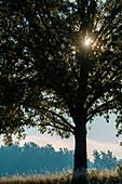 Sunrise through a tree
