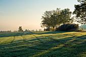 Field in early morning