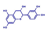 Catechin herbal antioxidant molecule, illustration