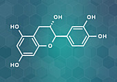 Catechin herbal antioxidant molecule, illustration
