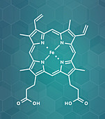 Haem B molecule, illustration