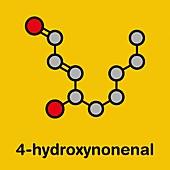 4-Hydroxynonenal molecule, illustration