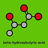 Beta-hydroxybutyric acid molecule, illustration