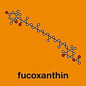 Fucoxanthin brown algae pigment molecule, illustration