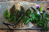 Various fresh herbs