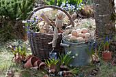 Traubenhyazinthen und Strahlenanemone zum Einpflanzen, Korb mit Utensilien und Zinkeimer als Osternest mit Ostereiern