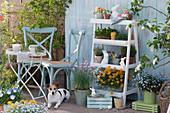 Blumentreppe mit Goldlack, Vergißmeinnicht 'Myomark', Schnittlauch, Jungpflanzen von Tomaten und Kapuzinerkresse, Thymian, Oregano und Töpfe mit Utensilien und Sämereien, kleine Sitzgruppe, Osterhasen, Hund Zula