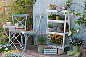 Blumentreppe mit Goldlack, Vergißmeinnicht 'Myomark', Schnittlauch, Jungpflanzen von Tomaten und Kapuzinerkresse, Thymian, Oregano und Töpfe mit Utensilien und Sämereien, kleine Sitzgruppe