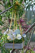Hängendes Osternest mit Kresse, Ostereiern, Osterhase und Blüten vom Hornveilchen