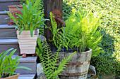 Wasserfaß mit Schachtelhalm, Farne, Töpfe mit Pflanzen auf Bangkirai-Treppe