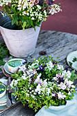 Frühsommer-Strauß und Kranz aus Lupinen, Akelei, Gerste und Wiesenkümmel