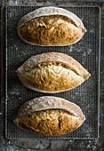 Drei Bagatta-Brote