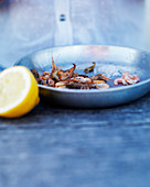 Freshly rinsed shrimps in a pan