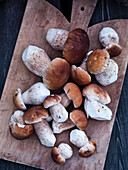 Porcini mushrooms on a wooden chopping board