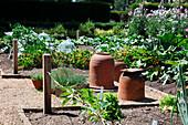 Gemüsegarten mit Rhabarbertöpfen aus Terracotta, Kasten mit Schnittlauch